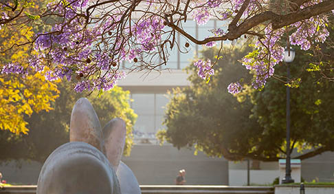 Shot of jacaranda trees on campus