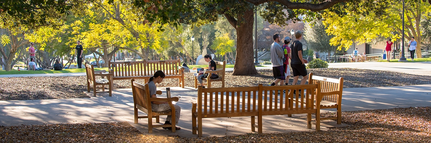 A student sits on one of the benches in the academic quad while others mingle in the background surrounded by sun-dappled trees